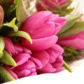 Поздравляем Пророкову Елену Юрьевну с Днём рождения!