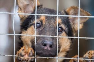 Помогите животным из приюта «Дом добра»!