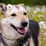 Благотворительная акция - собачий приют